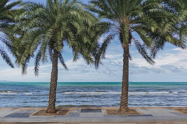 Palmiers au bord de la plage avec le sentier de promenade