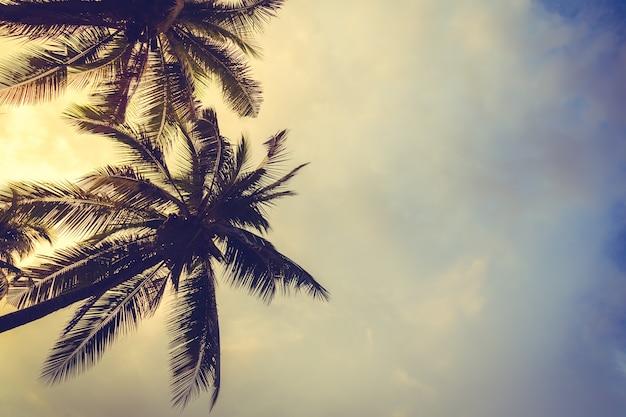 Des palmiers au coucher du soleil avec des nuages de fond
