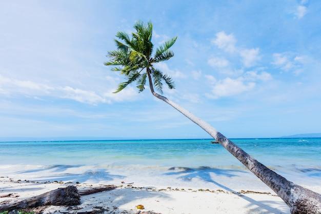 Palmiers, belle plage de sable blanc et mer tropicale