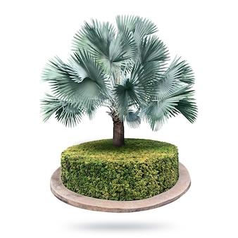 Palmiers bismarck