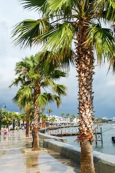 Palmiers en bord de mer