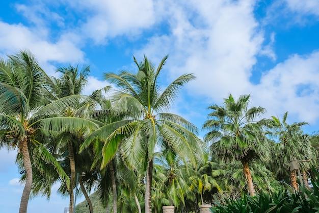 Palmiers et ciel bleu avec des nuages en journée ensoleillée d'été