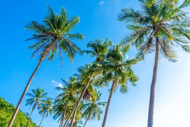 Palmiers contre le ciel. jungle tropicale