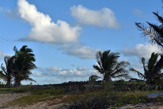 Palmiers contre le ciel