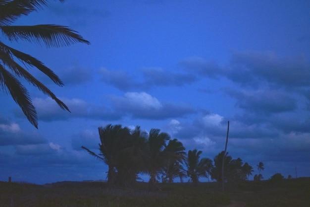 Palmiers sur la côte de la mer au coucher du soleil