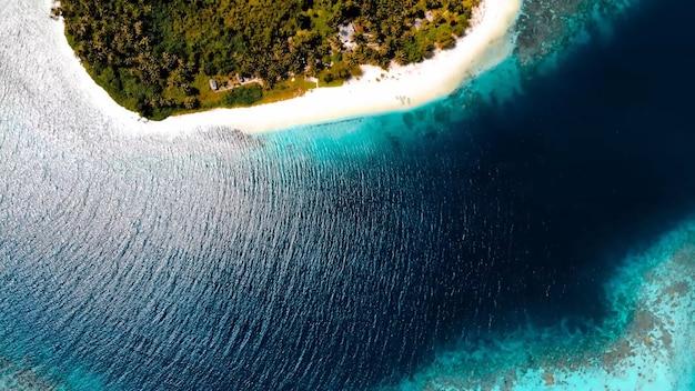 Les palmiers de la côte de l'océan sablent les vagues d'été