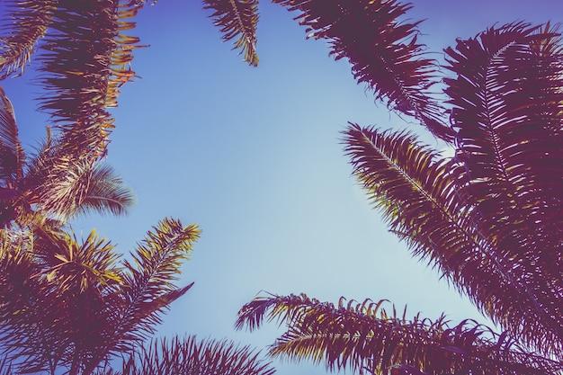 Palmiers coucher de soleil arbre cru