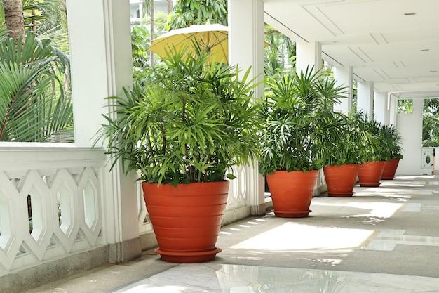 Palmiers dans le bâtiment