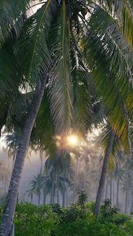 Palmiers dans la brume matinale dans les rayons du soleil