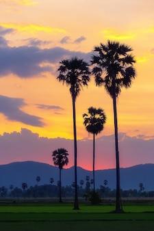 Palmiers dans les champs avec un beau ciel coloré