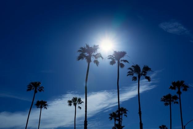 Palmiers dans le sud de la californie, région de newport