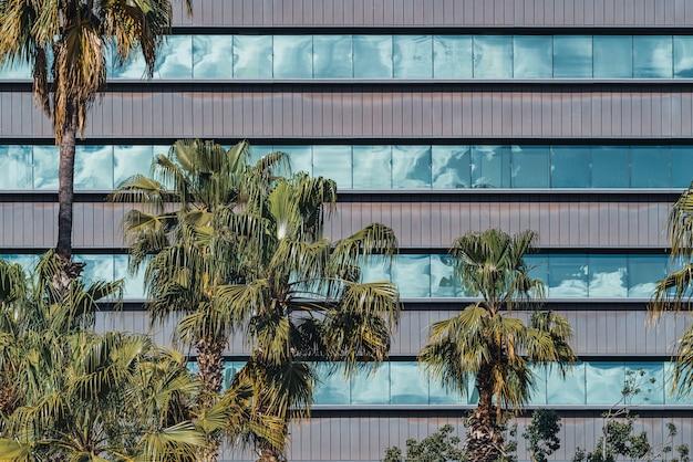 Palmiers devant les fenêtres vitrées de la façade d'un immeuble de bureaux