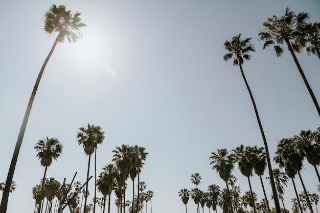 Des palmiers en été