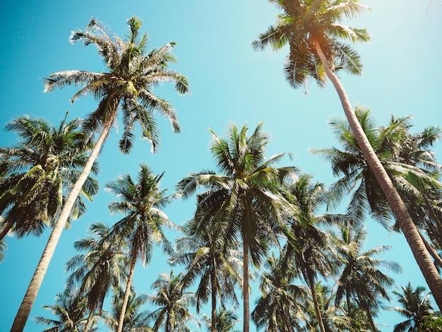 Palmiers en été