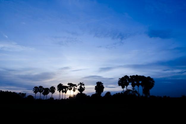 Palmiers sur le fond d'un beau coucher de soleil