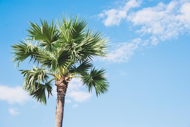 Palmiers, fond tropical