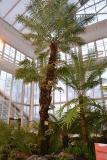 Palmiers fougères
