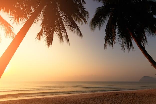 Palmiers et incroyable ciel nuageux sur le lever du soleil sur l'île tropicale dans l'océan indien