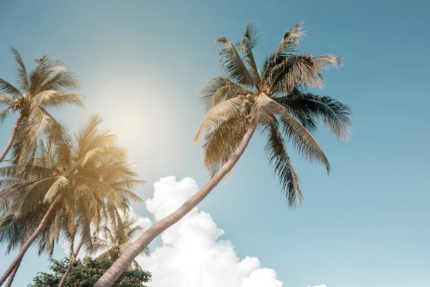 Palmiers de noix de coco, beau paysage tropical, filtre vintage.
