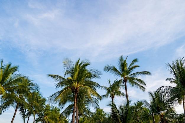 Palmiers de noix de coco avec fond de concept été coucher de soleil ciel et nuages.