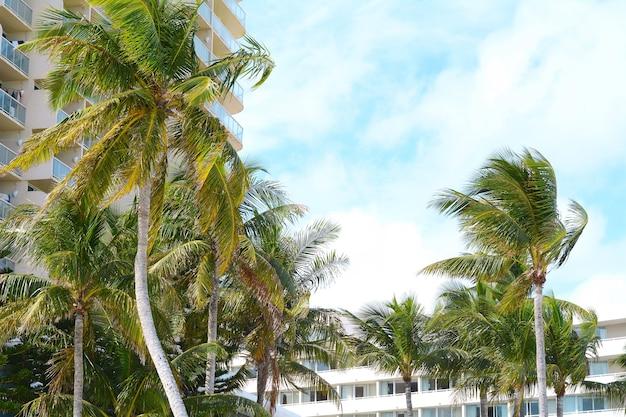 Palmiers par temps ensoleillé.