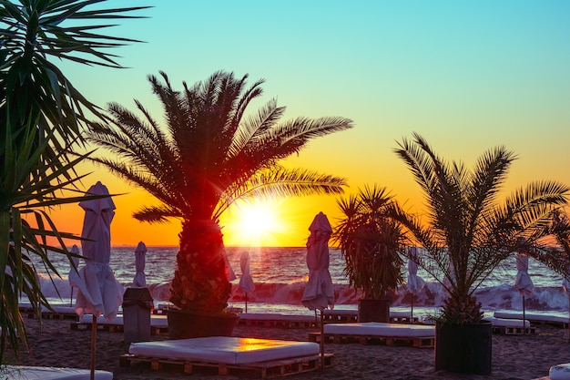 Palmiers et plage à la mer noire en bulgarie