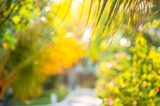 Palmiers sur la plage de sable blanc. playa sirena. cayo largo. cuba.