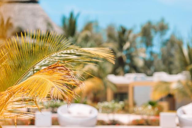 Palmiers Sur La Plage De Sable Blanc. Playa Sirena. Cayo Largo. Cuba. Photo Premium