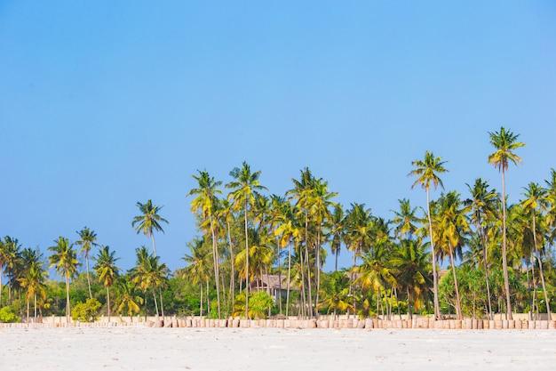 Palmiers sur la plage de sable blanc