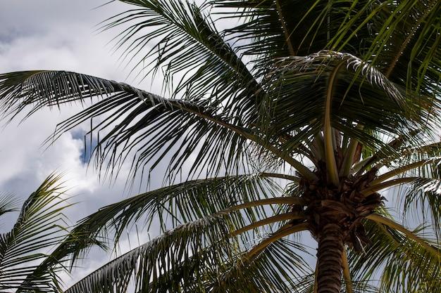 Palmiers en république dominicaine pendant la journée ensoleillée