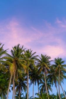 Palmiers tropicaux contre un ciel coucher de soleil bleu-violet. coucher de soleil sous les tropiques