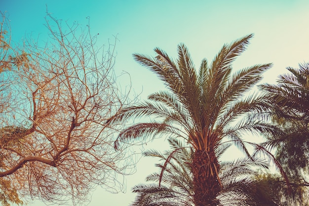 Palmiers tropicaux contre un ciel coucher de soleil