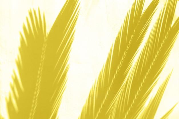 Palmiers tropicaux laisse des ombres sur fond texturé mur blanc. concept à la mode de l'été.
