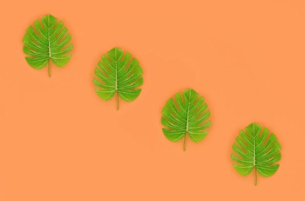 Palmiers tropicaux monstera feuilles se trouve sur un papier de couleur pastel