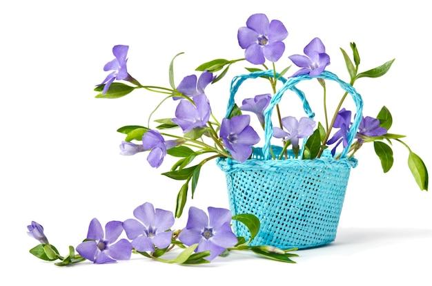 Panier bleu avec de belles fleurs pervenche sur fond blanc