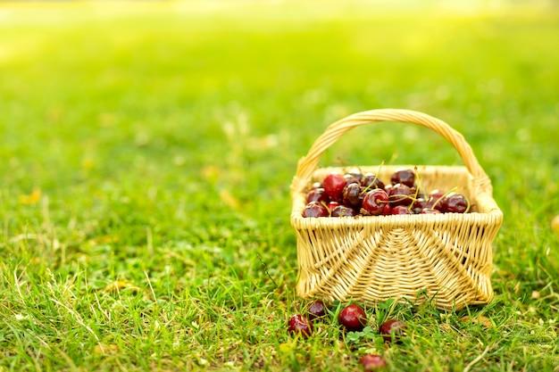 Panier avec des cerises rouges sur l'herbe verte