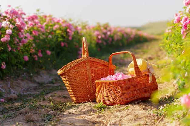 Panier avec fleur de roses à l'huile roses.