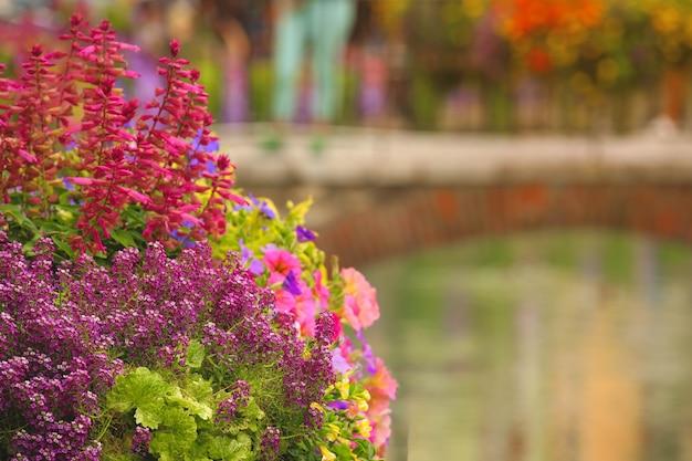 Panier de fleurs suspendu avec des fleurs de pétunia dans la rue en été décor urbain.