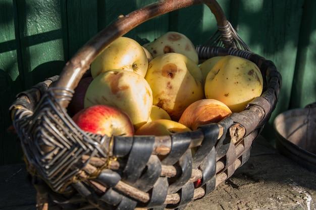 Panier en osier avec des pommes fraîches et laides biologiques
