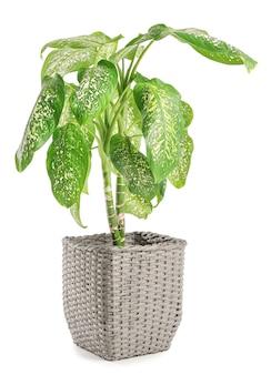 Panier avec plante d'intérieur sur surface blanche
