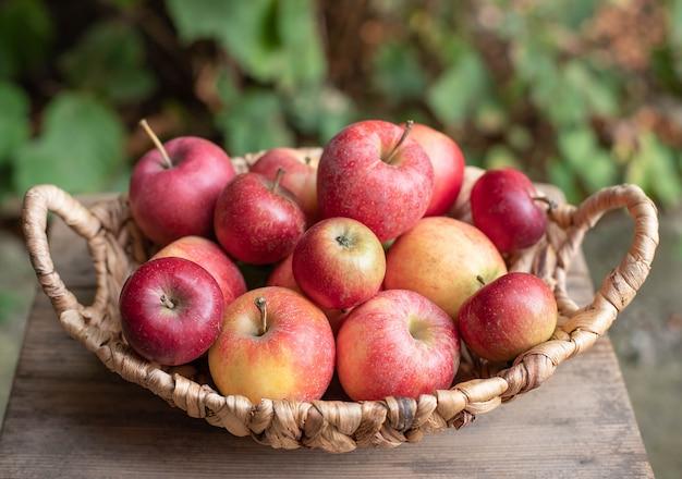 Panier de pommes mûres savoureuses sur un fond de jardin