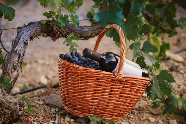 Panier de raisins avec une bouteille de vin dans le vignoble