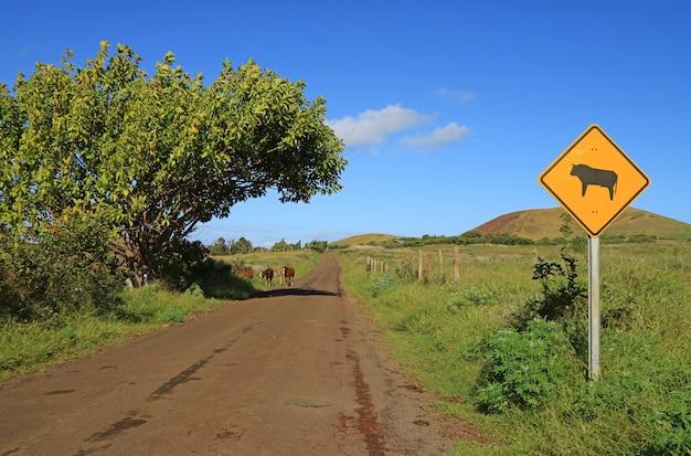 Panneau d'avertissement de vache sur le bord de la route avec petit groupe de chevaux sauvages en toile de fond, île de pâques, chili