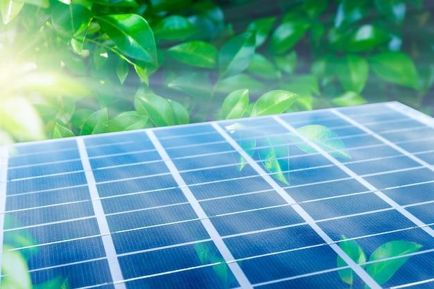 Panneau Solaire Parmi Les Feuilles Vertes. Module Photovoltaïque Intégré à L'écosystème. Concept Alternatif D'énergie Verte Propre. Photo Premium