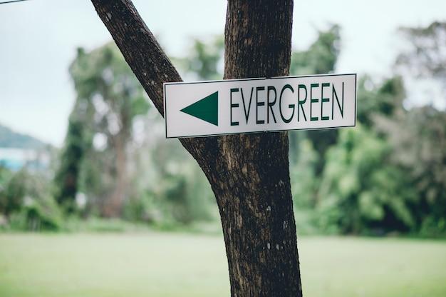Panneau vert coincé sur un arbre vert pour indiquer le chemin