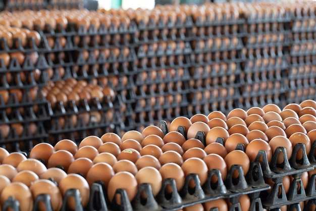 Panneaux d'oeufs disposés sur une ferme de poulet avec un fond d'oeuf flou, occupation des agriculteurs en thaïlande