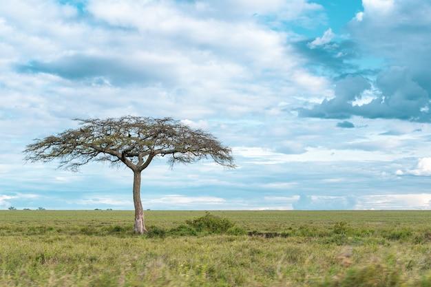 Panorama africain dans le parc national du serengeti