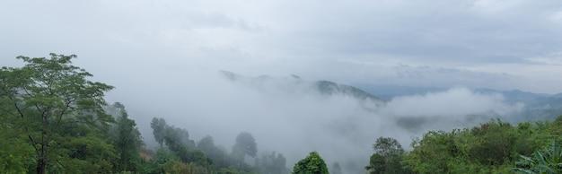 Panorama brouillard arbres couverts