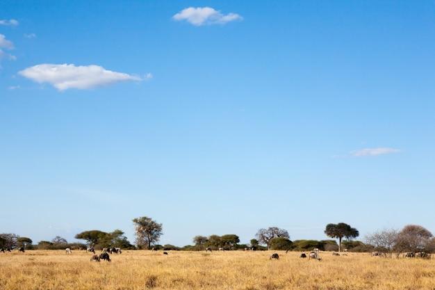 Panorama du parc national de tarangire, tanzanie
