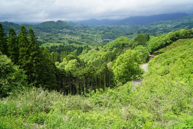 Panorama de la forêt de montagne verdure luxuriante